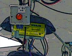 Adaptive Multicast Services (AMuSe)